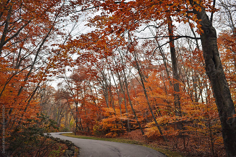 The Fall Colors They Talk About by David Keller for Stocksy United