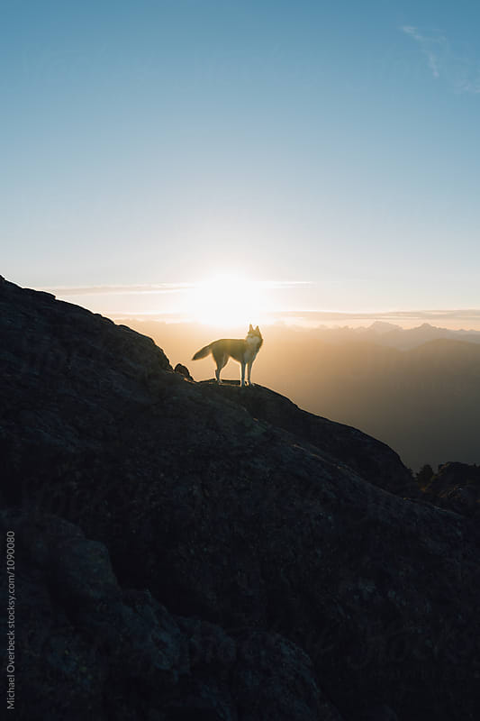 Mt Seymour Sunrise by Michael Overbeck for Stocksy United