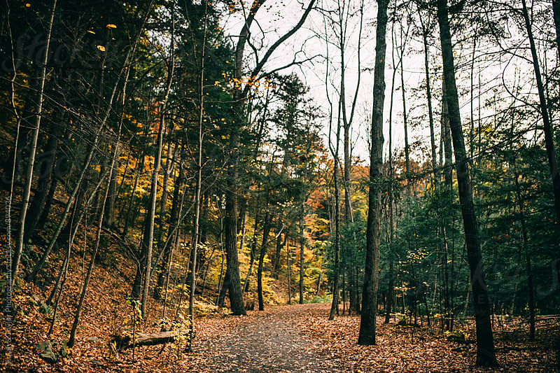 Hiking trail leading through trees by Isaiah & Taylor Photography for Stocksy United