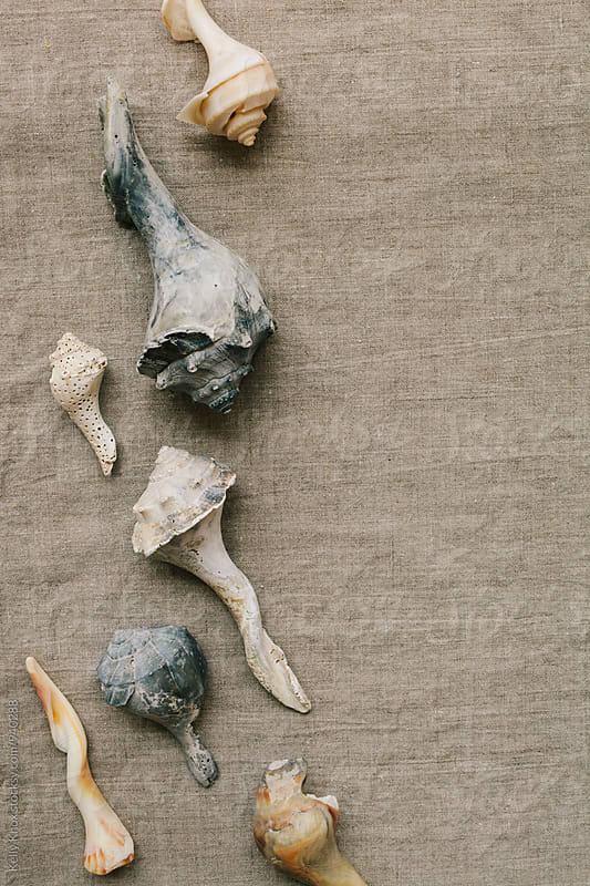variety of weathered conch shells on linen by Kelly Knox for Stocksy United