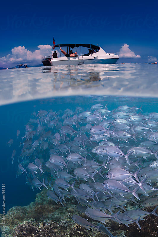 School of fish swimming in blue water under scuba diving boat on ocean surface by Soren Egeberg for Stocksy United