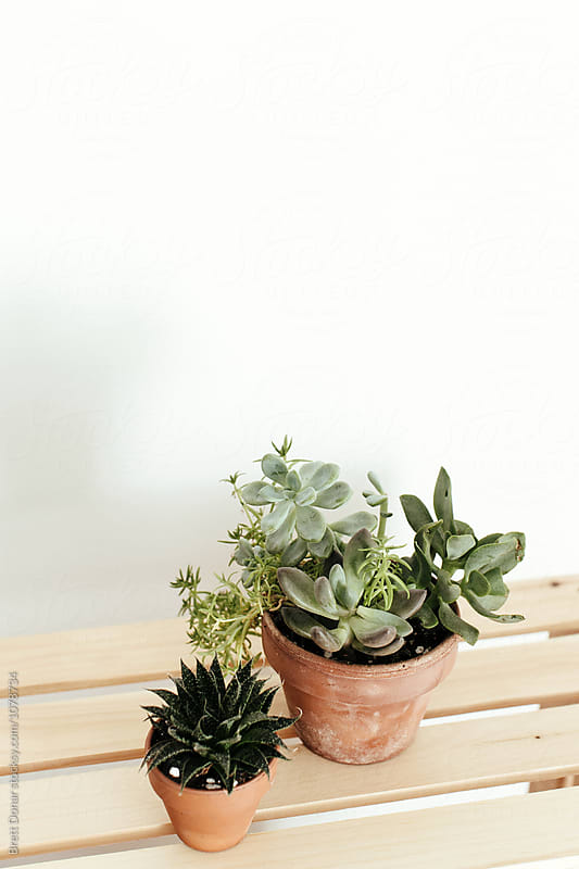Succulents by Brett Donar for Stocksy United