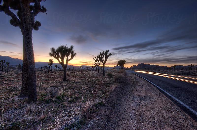 Light trail in the desert at night by Neil Kremer for Stocksy United