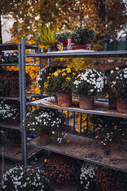 Street flower shop by Maja Topcagic for Stocksy United