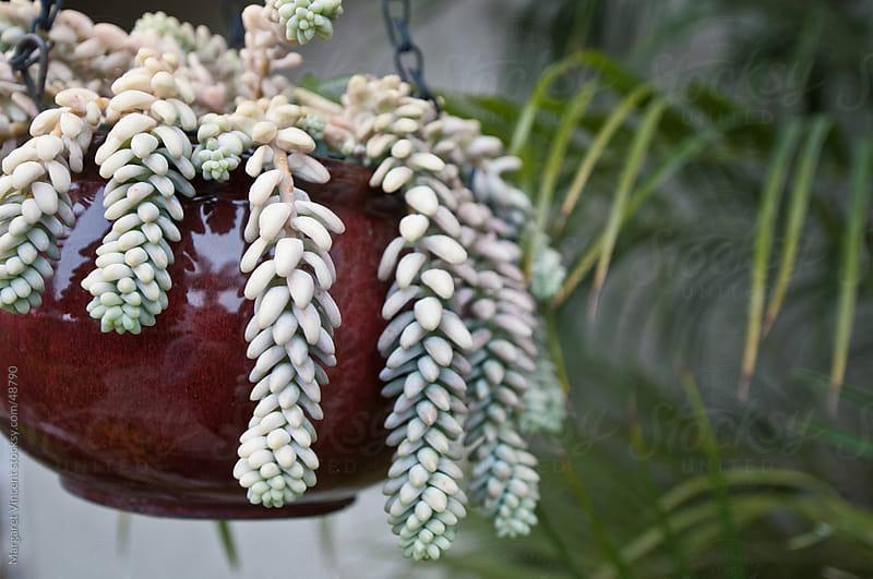 hanging succulent pot by Margaret Vincent for Stocksy United