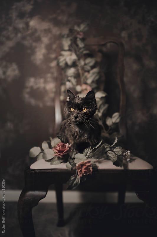 Portrait of an Elderly Grey Cat with Roses by Rachel Bellinsky for Stocksy United