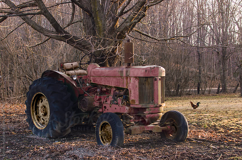 red tractor parked under a tree with a chicken by Deirdre Malfatto for Stocksy United