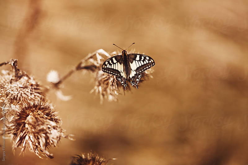 White butterfly on autumn blossom by Sergey Filimonov for Stocksy United