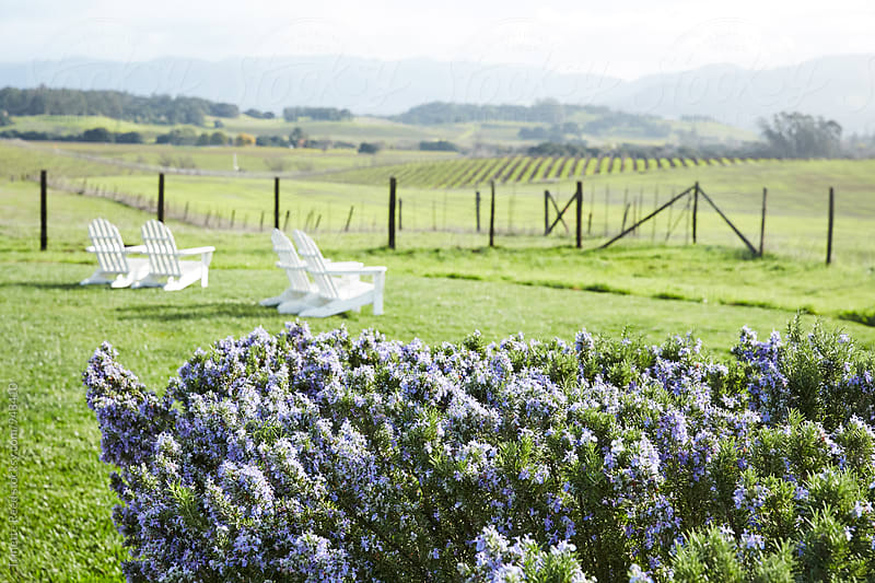 Rosemary and view of Napa Valley  by Trinette Reed for Stocksy United