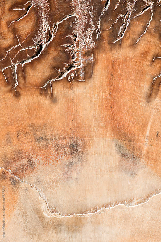 Petrified Wood fossil by Mark Windom for Stocksy United