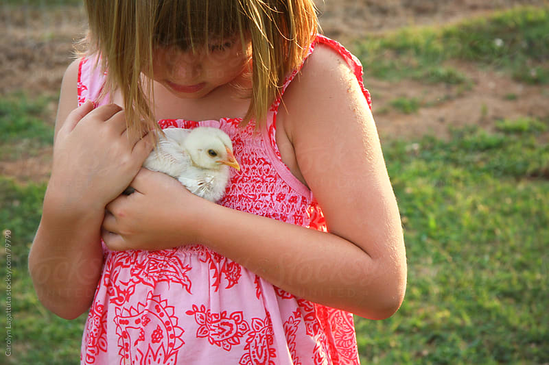 Little girl holding a baby chick on the farm by Carolyn Lagattuta for Stocksy United