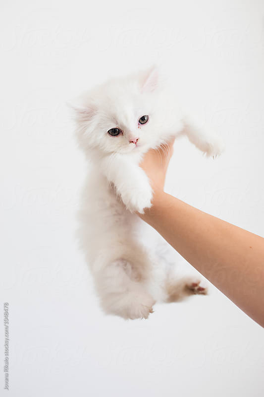 Young woman holding persian kitten by Jovana Rikalo for Stocksy United