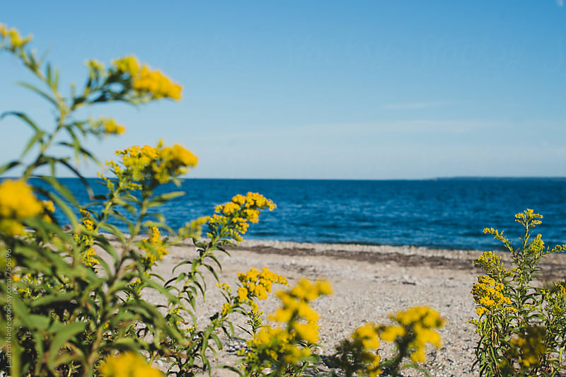 Yellow flowers by the ocean by Lauren Naefe for Stocksy United