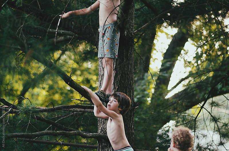 Three boys in a tree by Ali Deck for Stocksy United