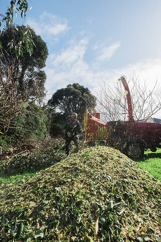 Man operating a mulching machine and creating large pile of chopped leaves and branches by Rowena Naylor for Stocksy United