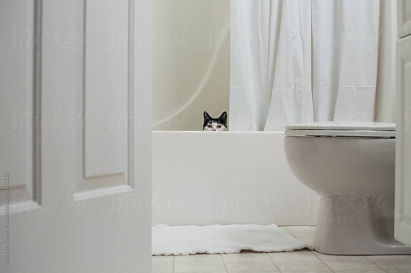 Black and white cat hides in the bathroom tub by Kathryn Swayze for Stocksy United