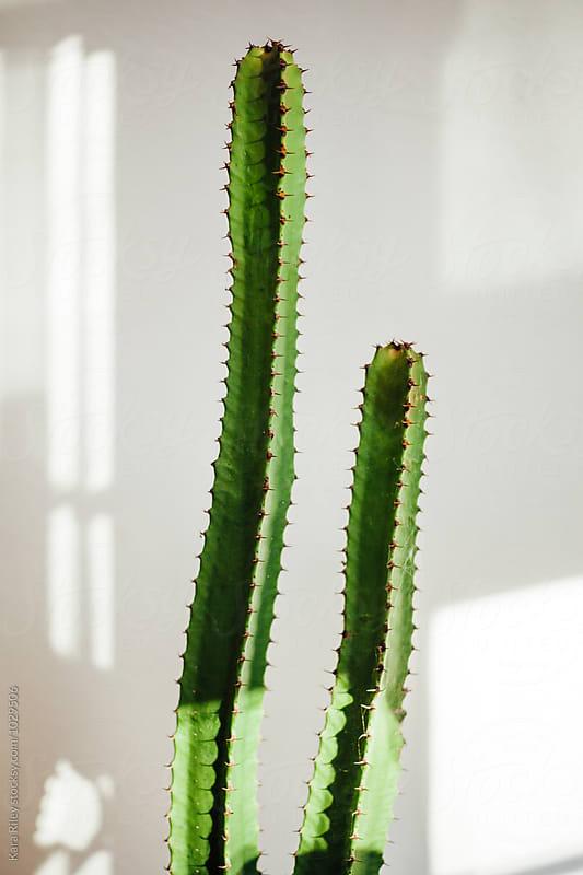 Cactus casting shadows by Kara Riley for Stocksy United