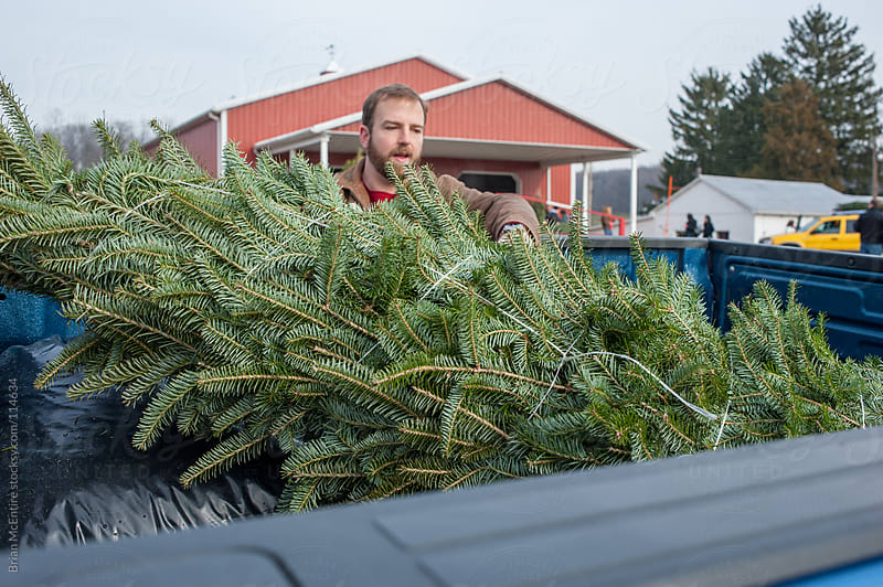 Father puts bundled tree in pickup truck by Brian McEntire for Stocksy United