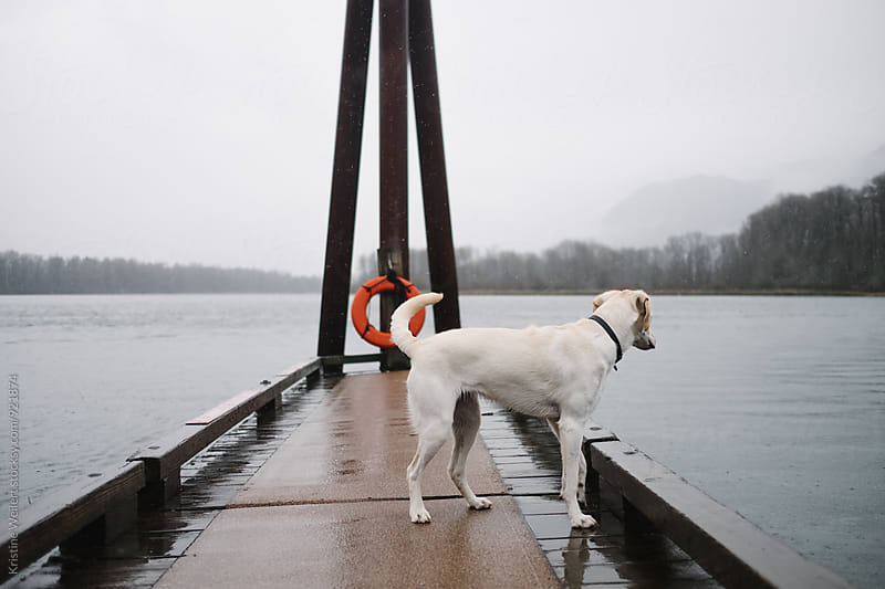 Dog Standing on Dock by Kristine Weilert for Stocksy United