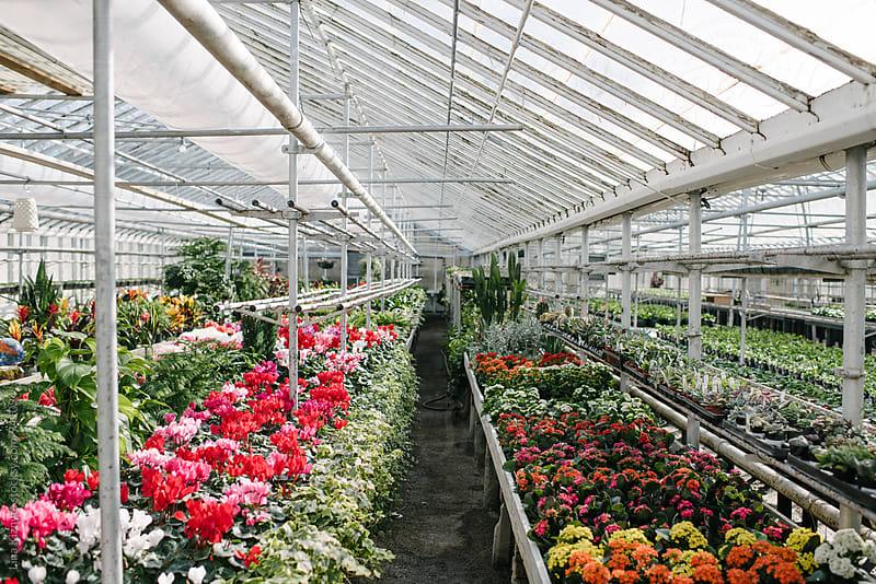 Greenhouse by Lina Kiznyte for Stocksy United