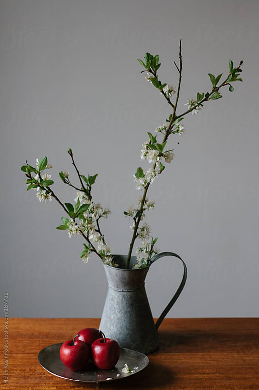 Apples and apple blossom by Helen Rushbrook for Stocksy United