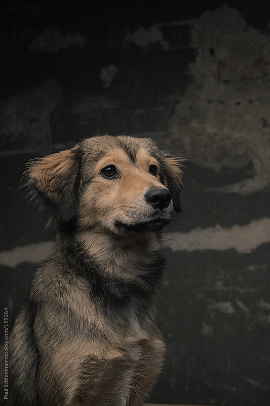 happy street dog by Paul Schlemmer for Stocksy United