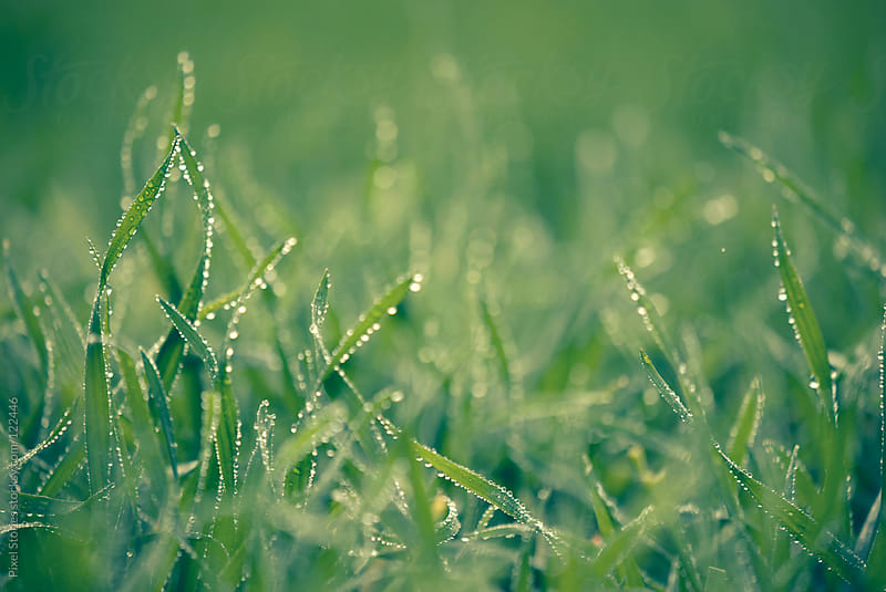 Grass with water drops by Pixel Stories for Stocksy United