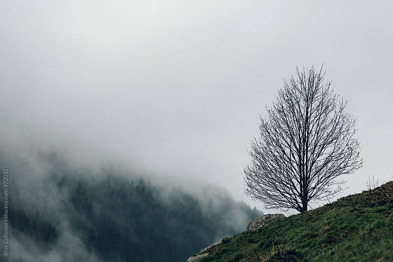 alone tree in front of Foggy Forest in the Mountains by Jordi Rulló for Stocksy United