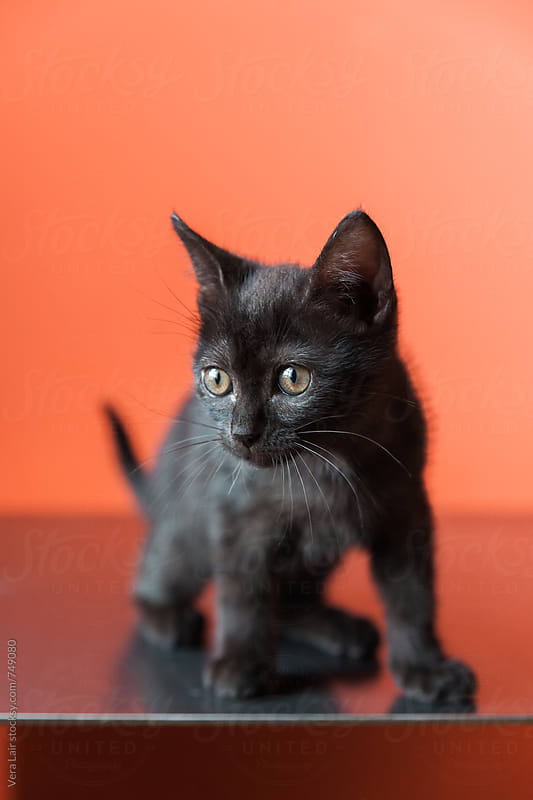 Black kitten by Vera Lair for Stocksy United