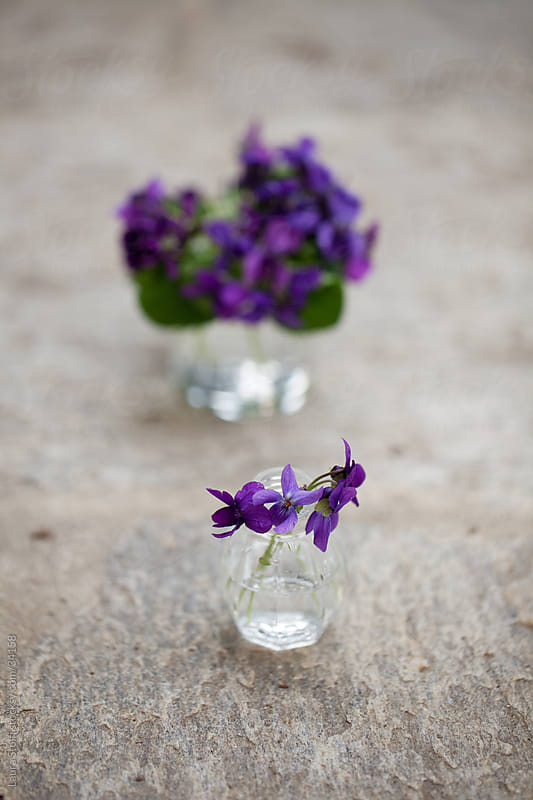 Little glass jars filled with water with a tiny violets bouquet in it by Laura Stolfi for Stocksy United