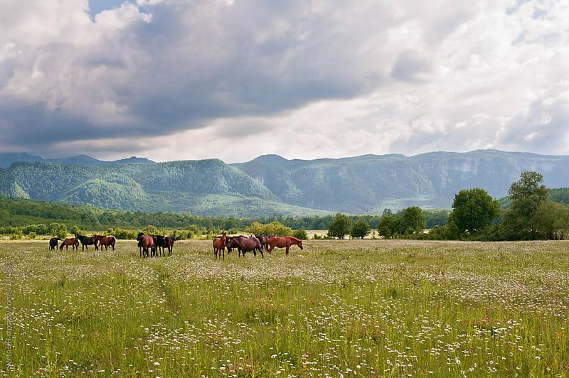The herd of horses by Sveta SH for Stocksy United