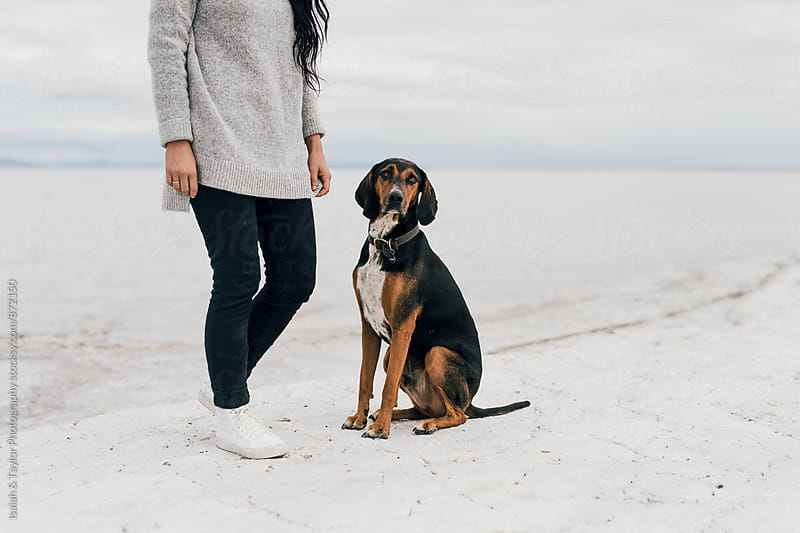 Good Dog Sitting with Human by Isaiah & Taylor Photography for Stocksy United