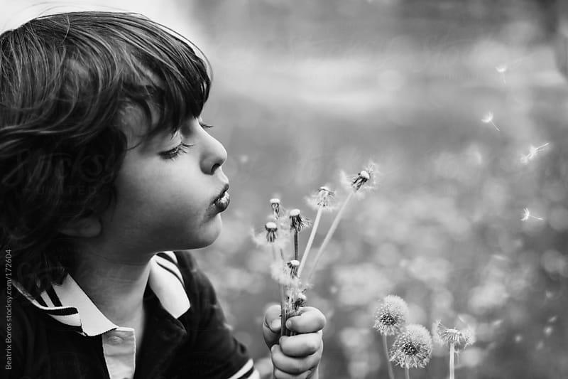 Little boy blowing dandelion by Beatrix Boros for Stocksy United