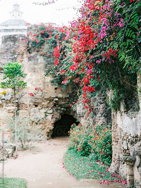 Flowers draping over old ruins by Daniel Kim Photography for Stocksy United