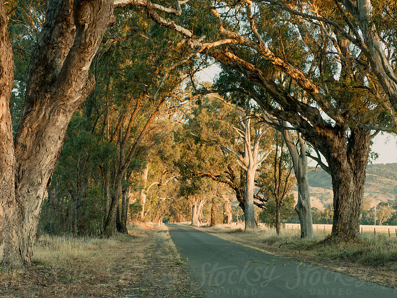 Barn Road, North East Victoria, Australia by Gary Radler Photography for Stocksy United