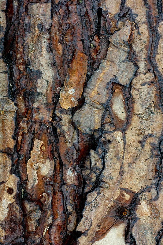 Pine tree bark macro by Marcel for Stocksy United