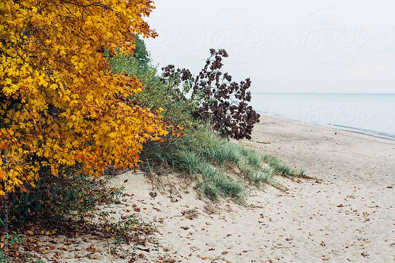 Autumn leaves on a tree by a lake by Gabriel (Gabi) Bucataru for Stocksy United