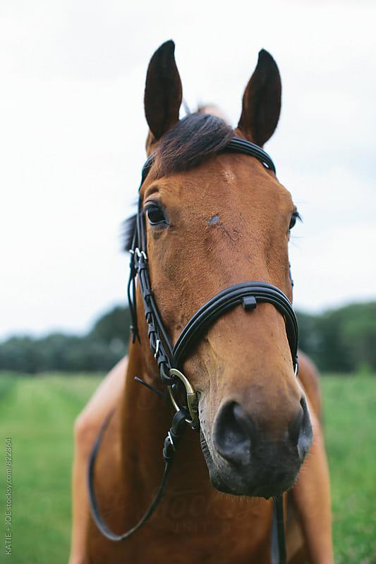 Headshot of Beautiful Chestnut Horse by KATIE + JOE for Stocksy United