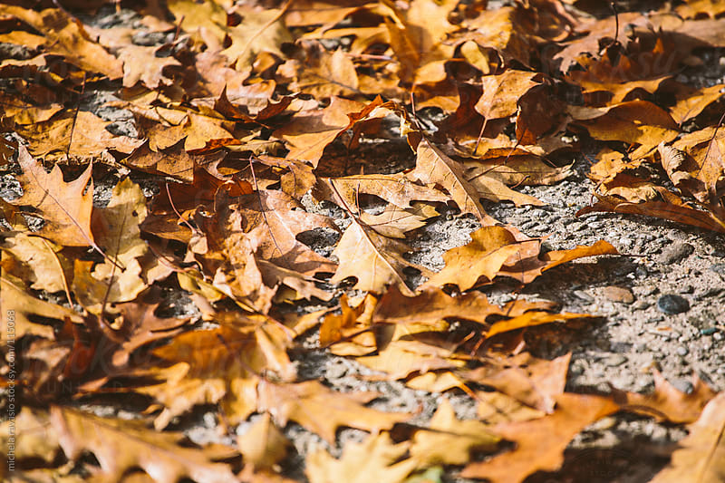 Autumn leaves on the ground by michela ravasio for Stocksy United