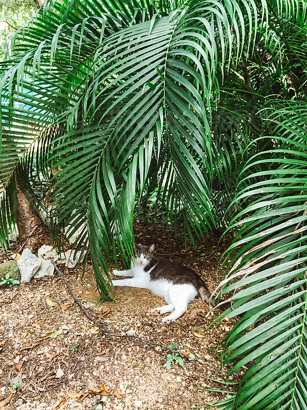 Cat hiding in tropical plants by Carey Shaw for Stocksy United