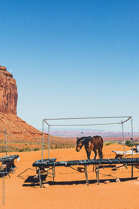 Horse among the stands in Monument Valley by michela ravasio for Stocksy United