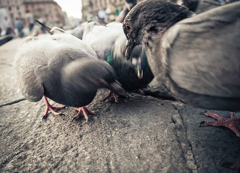 Pigeons in the city by GIC for Stocksy United