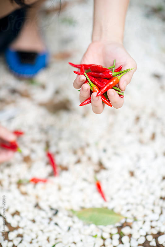 Woman gathering red chillis in garden by Lawren Lu for Stocksy United