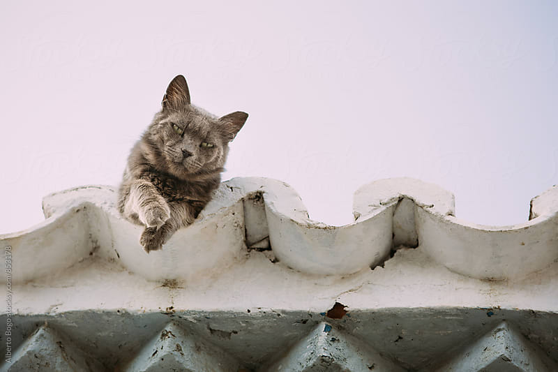 Cat on the roof by Alberto Bogo for Stocksy United