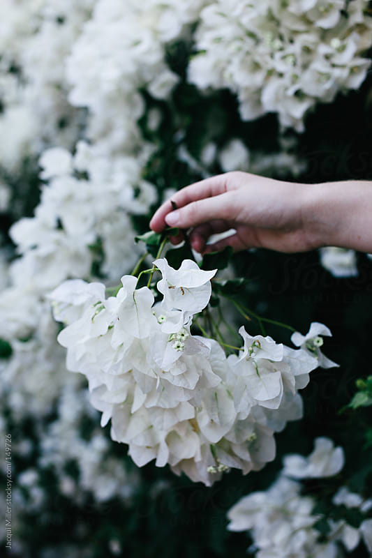 Girl holding a small branch full of white bougainvillea flowers by Jacqui Miller for Stocksy United