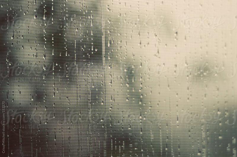 rainy day by Crissy Mitchell for Stocksy United