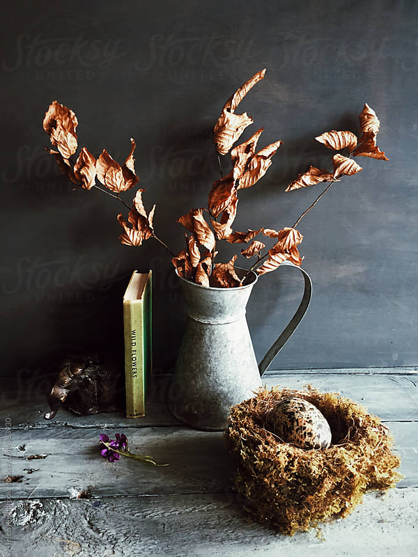 Copper beech leaves in a jug, with a nest and egg.  by Helen Rushbrook for Stocksy United