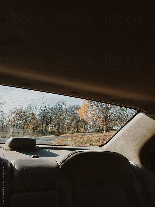 Backseat view of a park on a sunny Autumn day in the city by Constanza Caiceo for Stocksy United