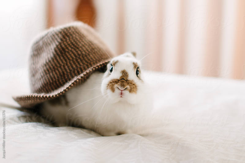 Rabbit wearing a hat by Jacqui Miller for Stocksy United