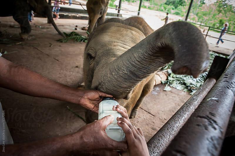 Elephant orphanage in Pinnawalla, Sri Lanka by Jino Lee for Stocksy United